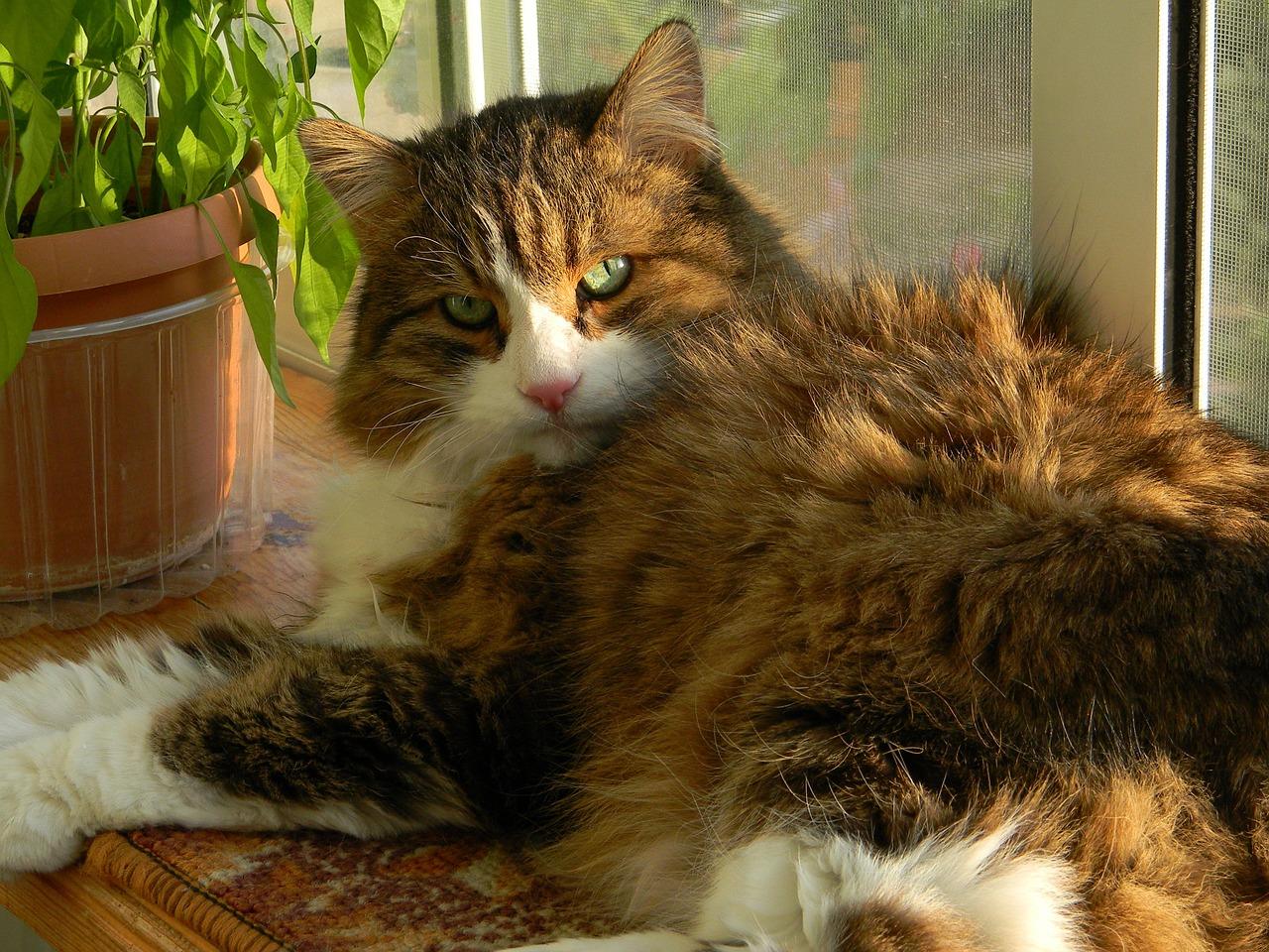 Domowe sposoby na zniwelowanie zapachu kociego moczu
